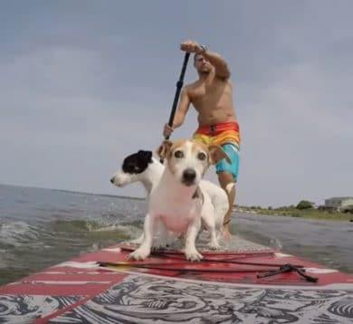 SUP Dog: disfrutar del paddle surf con tus perros es posible y divertido